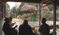 綺麗な桜を見ながら、一足早いお花見です(^o^)