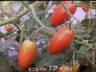 ダイジェストトマト